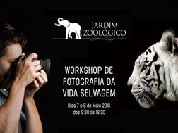 Workshop de fotografia no mundo selvagem do Jardim Zoológico